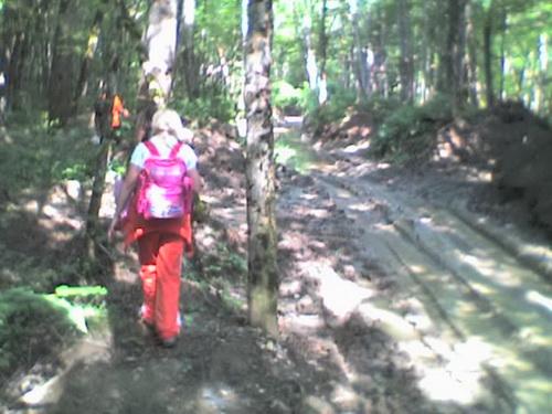 И снова в лес