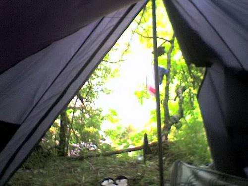 Утро. Вид из палатки