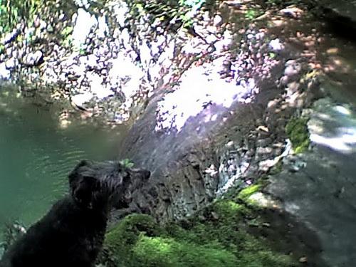 Лесная собака у водопада