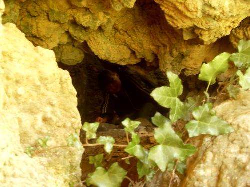 Плющ и пещера.