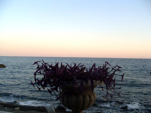 Цветок и море.