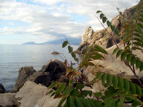 Вид на море из-за веток дерева