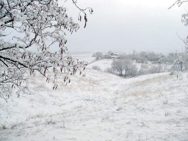 Дерево, снег, домики.