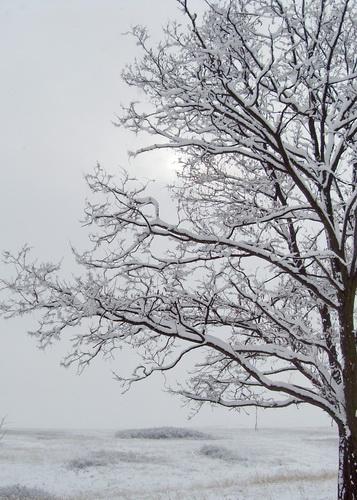 Зимнее солнце сквозь ветви дерева