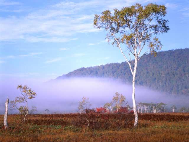 Дерево и туман