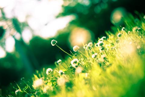Луч солнца в траве