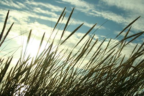Среди высокой травы